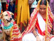 Shocking Human-Animal Marriage Tradition That Is Followed In India & Abroad. You'll Faint At What Happens At 5