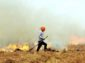 India's stubble burning leads to USD 30 billion economic loss