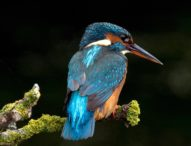When PGI Pediatric Surgeon rescued Bird Kingfisher, he gave us Humane Goals